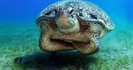 angry_sea_turtle