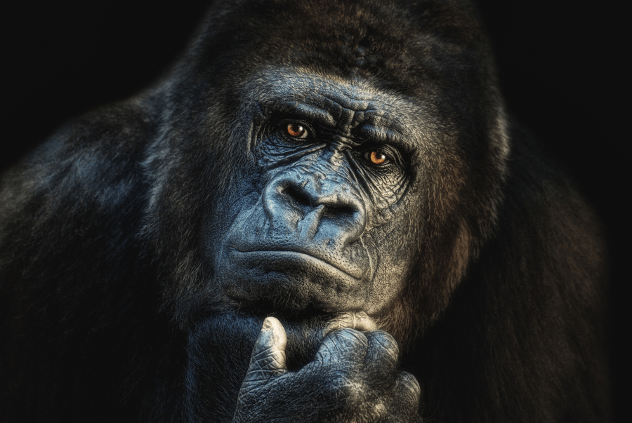 can you guess what this gorilla is thinking amazing photo of the day dottech. Black Bedroom Furniture Sets. Home Design Ideas