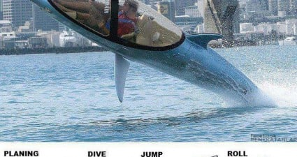 dolphine_diving_power_boat