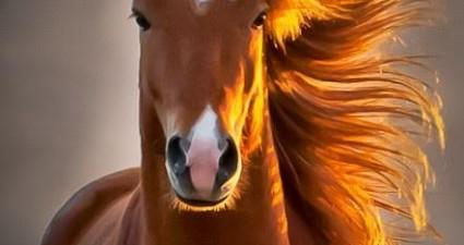 hot_horse