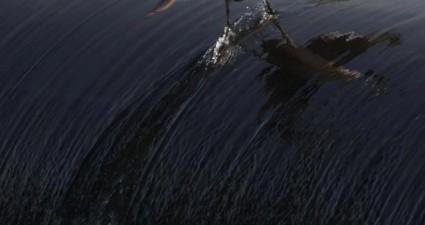 surfing_bird