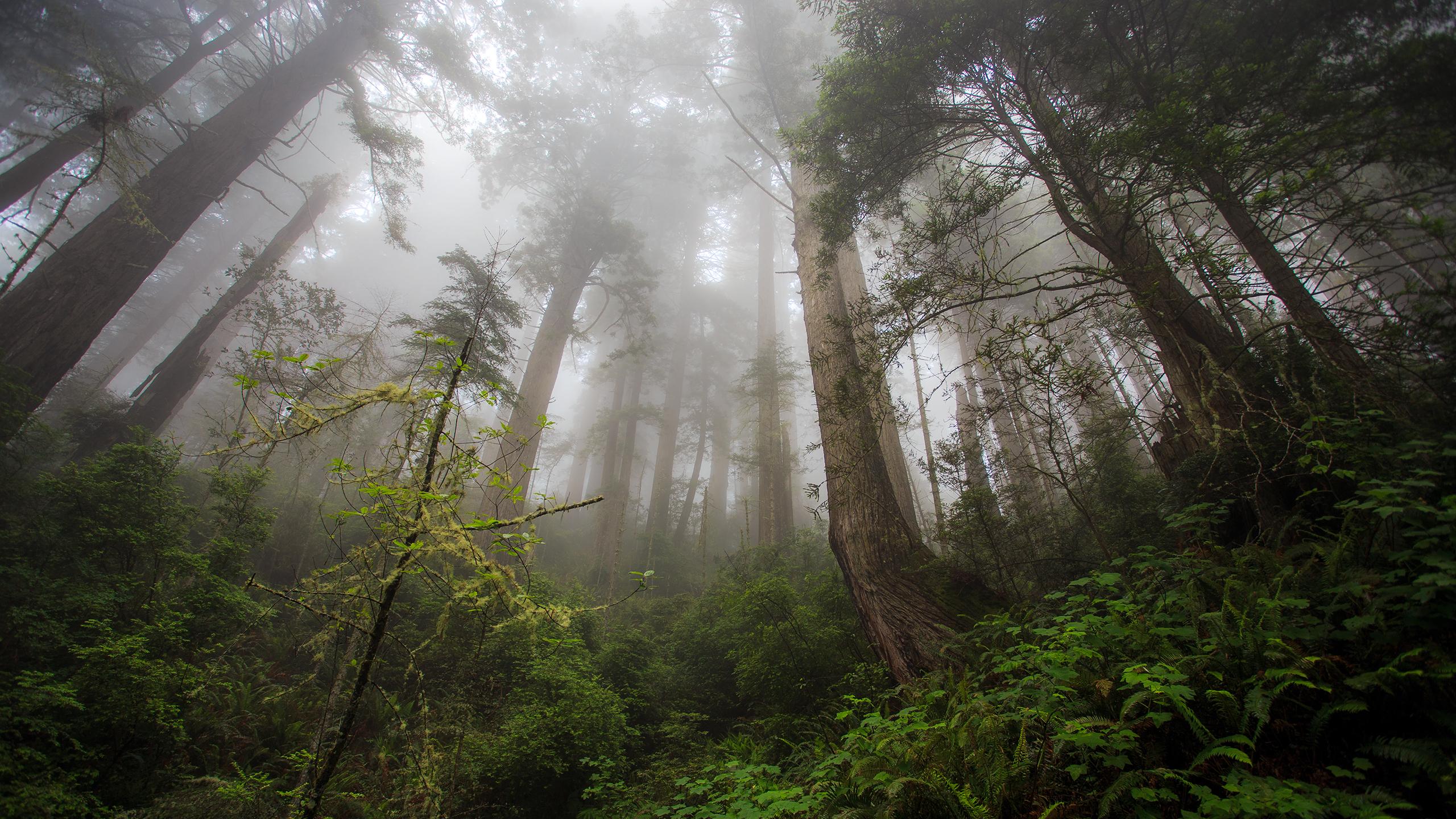 Wonderful Foggy Forest Wallpaper