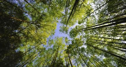 treetops_2560x1440