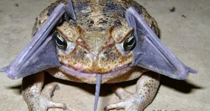 alien_frog