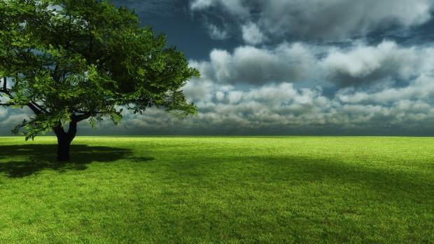 Tree Of Life Wallpaper 2560x1440