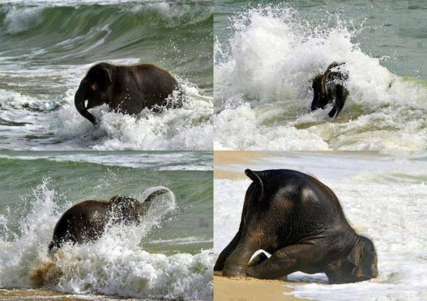 elephant_on_beach