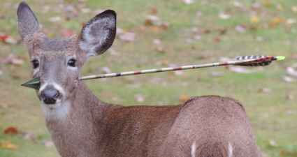 Deer-Arrow Removed