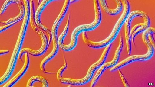 The project to create the C. elegans nematode in code should unlock more secrets of how it lives