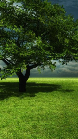 A-Big-Green-Tree-On-The-Prairie-250x443