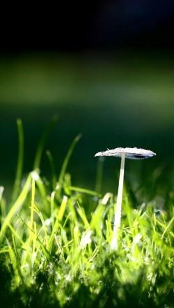 Mushroom-In-Grass-250x443