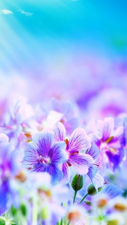 Pink-Purple-Flowers-250x443