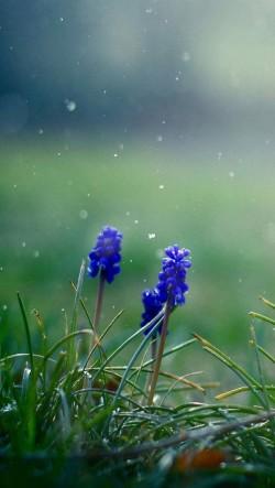 Purple-Flowers-250x443