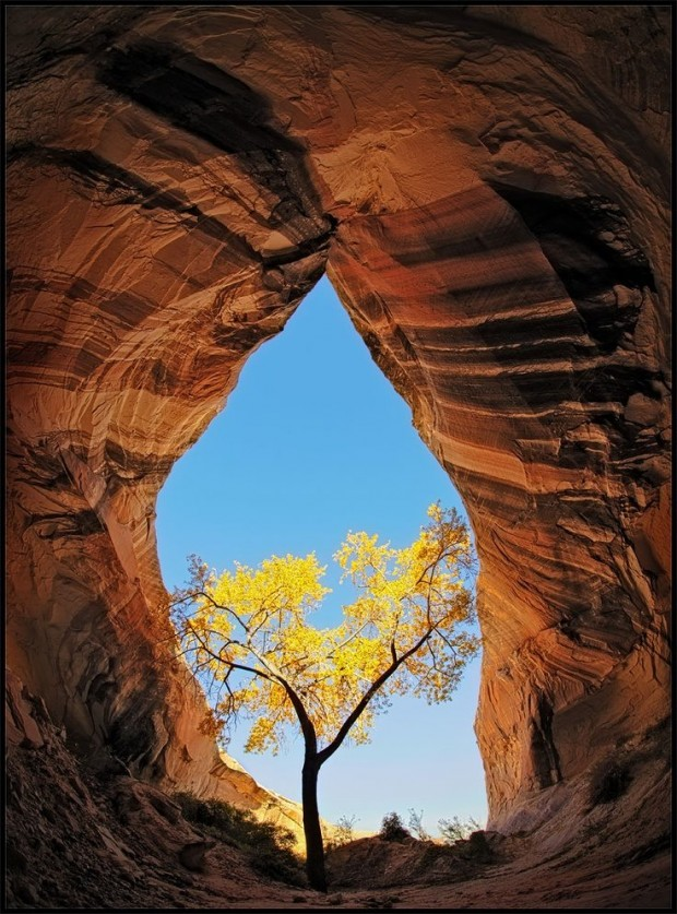 tree in cave
