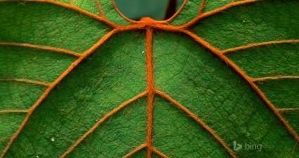 leaf detailed