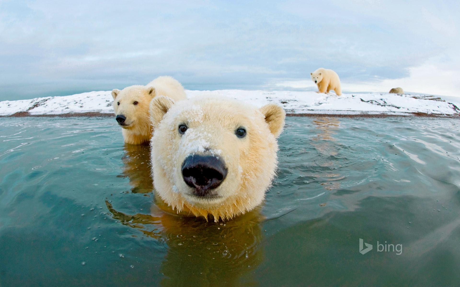 Spring at the Arctic National Wildlife Refuge [Amazing ...