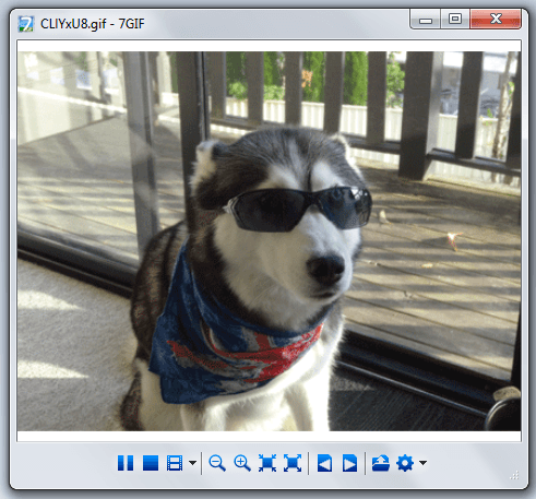 view animated GIFs in Windows